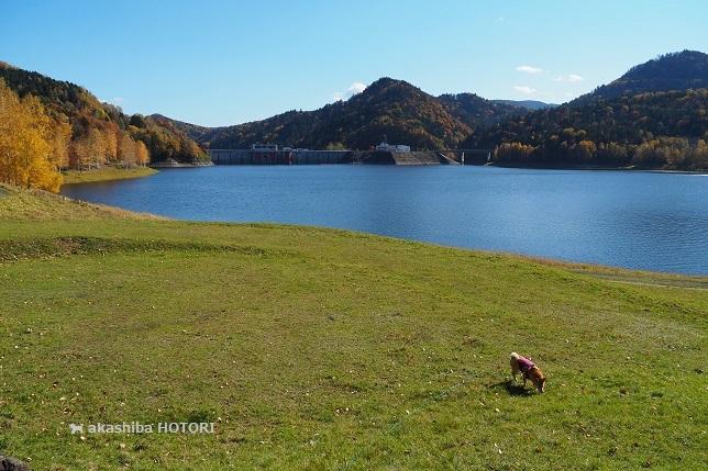 鹿ノ子ダムで紅葉狩り_f0150377_19203538.jpg