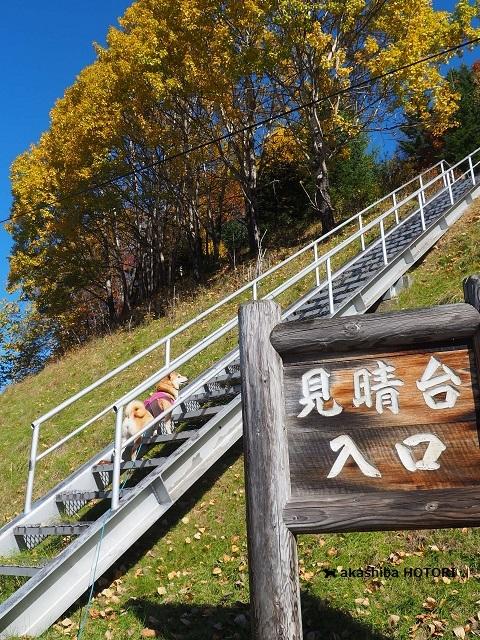 鹿ノ子ダムで紅葉狩り_f0150377_19424067.jpg