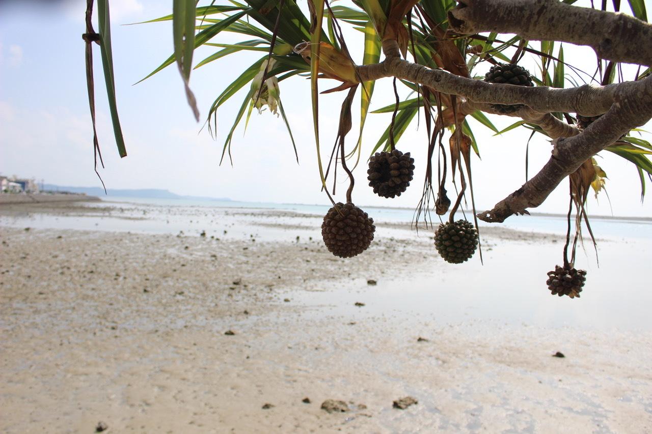 ネコクラブABC合同-06◆秋の干潟で収穫まつり(10/17)沖縄随一の干潟、泡瀬干潟で丸一日潮干狩りにチャレンジ。貝もカニもいっぱいで、お腹いっぱいになりました!_d0363878_00101360.jpeg