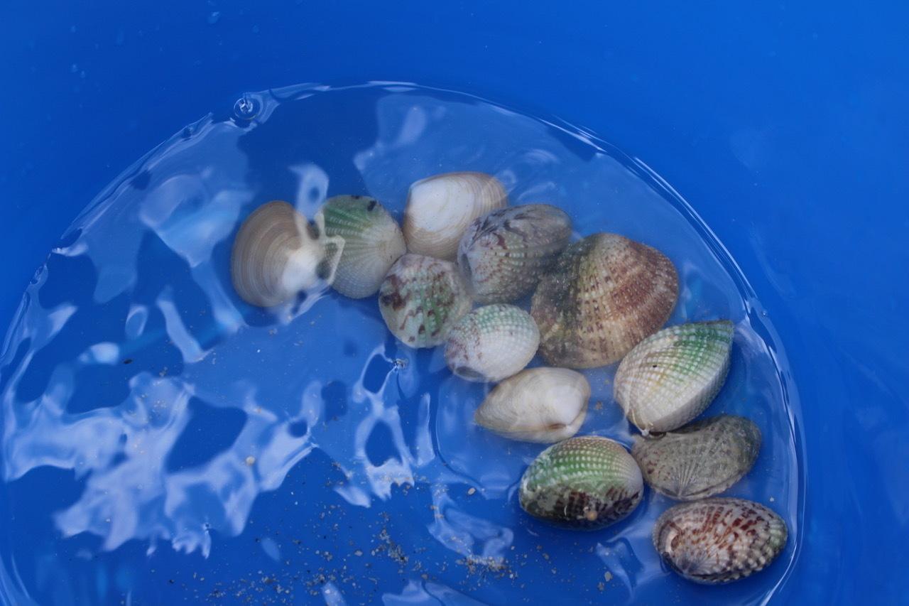 ネコクラブABC合同-06◆秋の干潟で収穫まつり(10/17)沖縄随一の干潟、泡瀬干潟で丸一日潮干狩りにチャレンジ。貝もカニもいっぱいで、お腹いっぱいになりました!_d0363878_00111200.jpeg