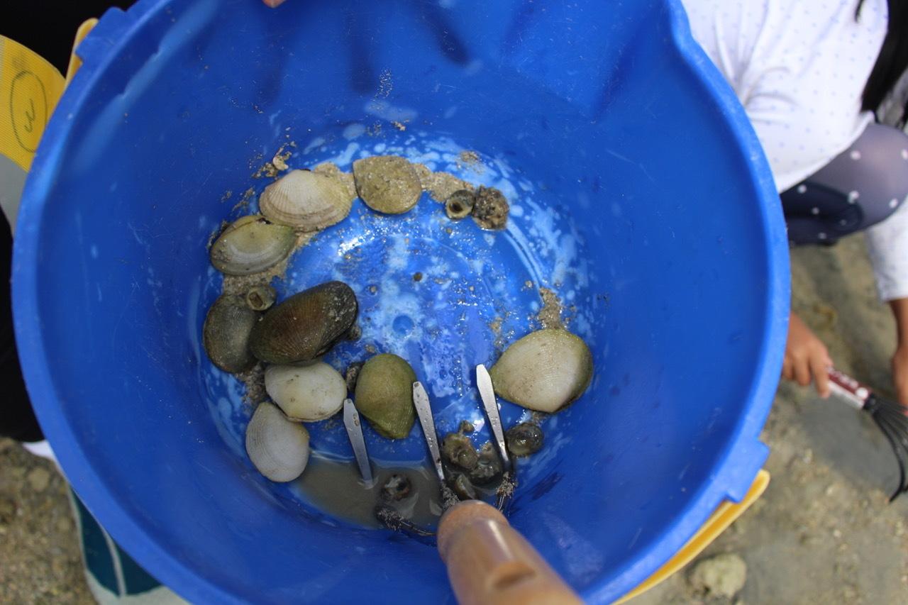 ネコクラブABC合同-06◆秋の干潟で収穫まつり(10/17)沖縄随一の干潟、泡瀬干潟で丸一日潮干狩りにチャレンジ。貝もカニもいっぱいで、お腹いっぱいになりました!_d0363878_00111811.jpeg