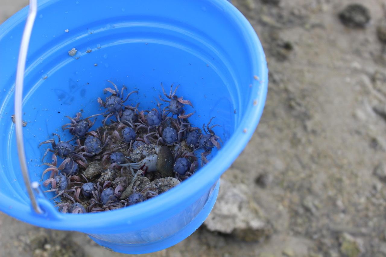 ネコクラブABC合同-06◆秋の干潟で収穫まつり(10/17)沖縄随一の干潟、泡瀬干潟で丸一日潮干狩りにチャレンジ。貝もカニもいっぱいで、お腹いっぱいになりました!_d0363878_00113312.jpeg