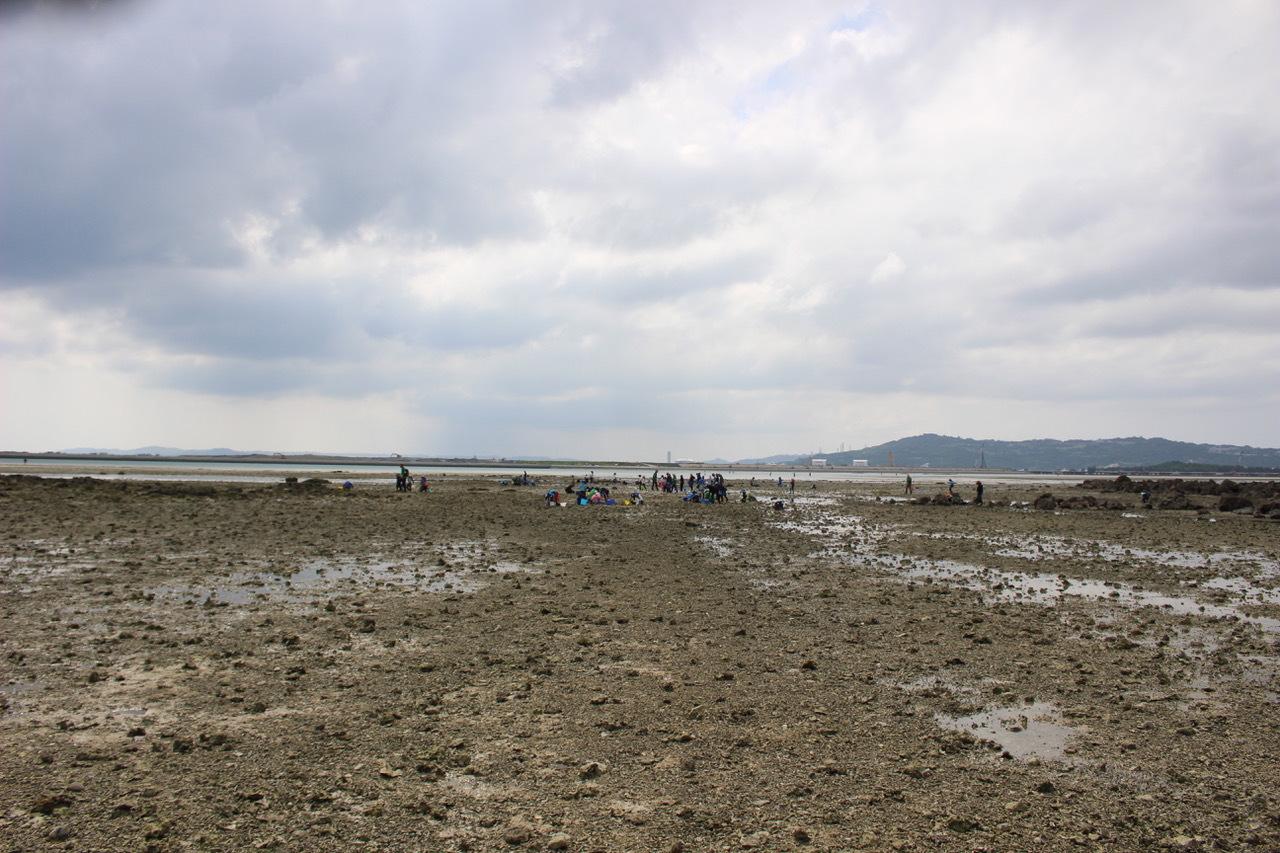 ネコクラブABC合同-06◆秋の干潟で収穫まつり(10/17)沖縄随一の干潟、泡瀬干潟で丸一日潮干狩りにチャレンジ。貝もカニもいっぱいで、お腹いっぱいになりました!_d0363878_00121717.jpeg