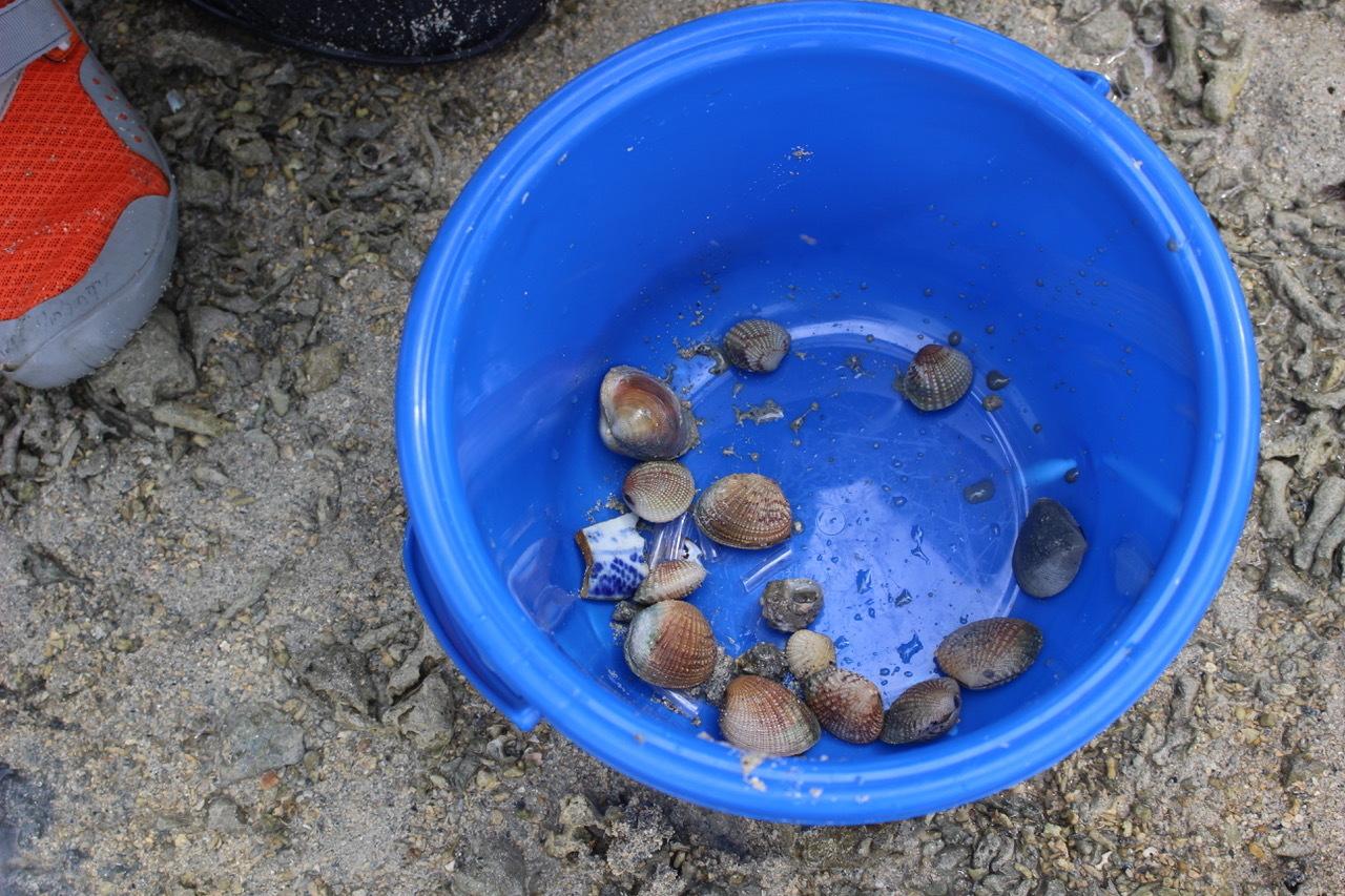 ネコクラブABC合同-06◆秋の干潟で収穫まつり(10/17)沖縄随一の干潟、泡瀬干潟で丸一日潮干狩りにチャレンジ。貝もカニもいっぱいで、お腹いっぱいになりました!_d0363878_00121761.jpeg