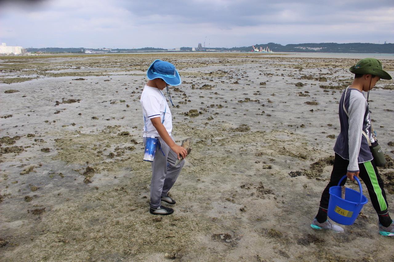 ネコクラブABC合同-06◆秋の干潟で収穫まつり(10/17)沖縄随一の干潟、泡瀬干潟で丸一日潮干狩りにチャレンジ。貝もカニもいっぱいで、お腹いっぱいになりました!_d0363878_00121877.jpeg