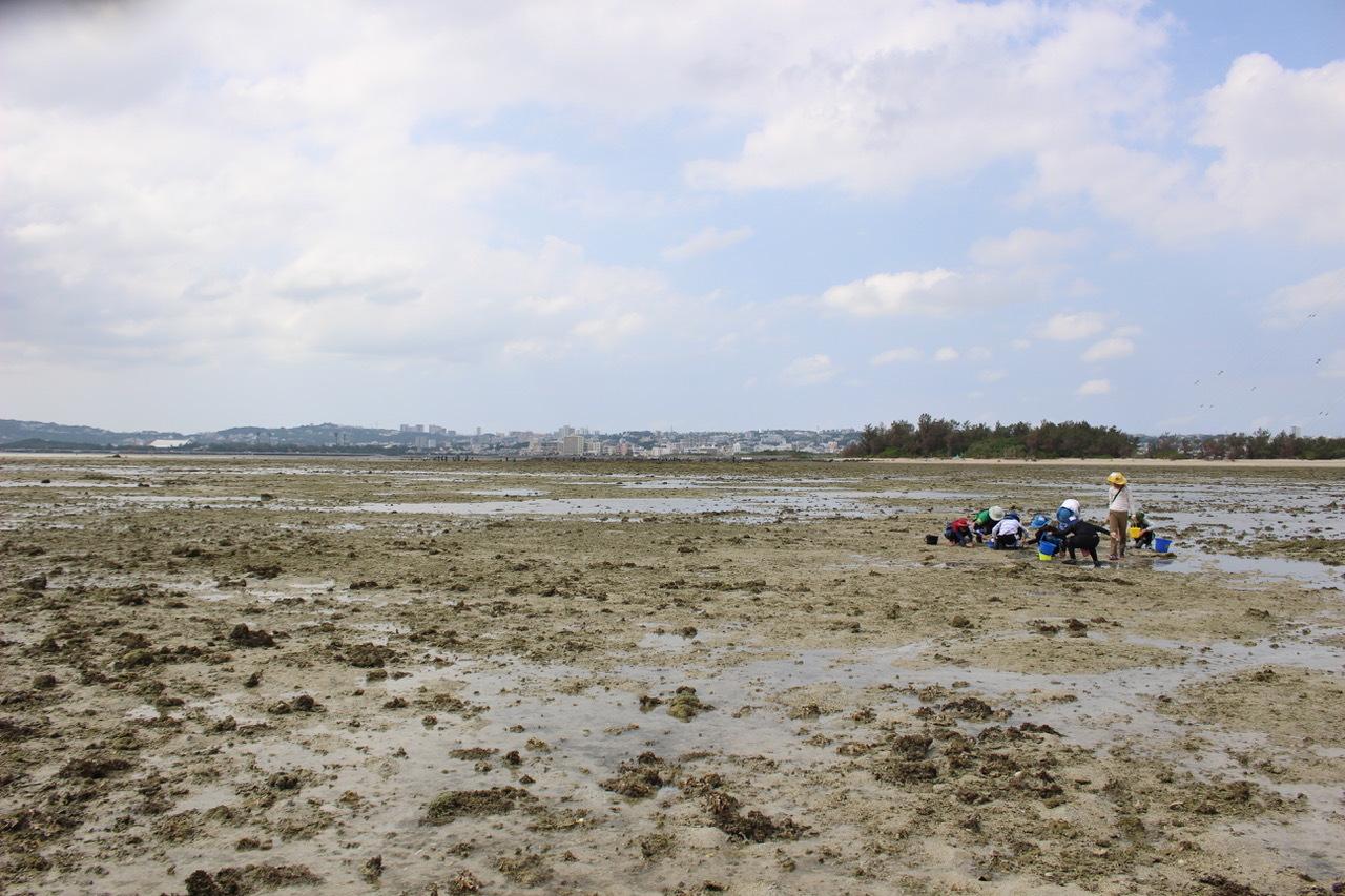 ネコクラブABC合同-06◆秋の干潟で収穫まつり(10/17)沖縄随一の干潟、泡瀬干潟で丸一日潮干狩りにチャレンジ。貝もカニもいっぱいで、お腹いっぱいになりました!_d0363878_00121881.jpeg