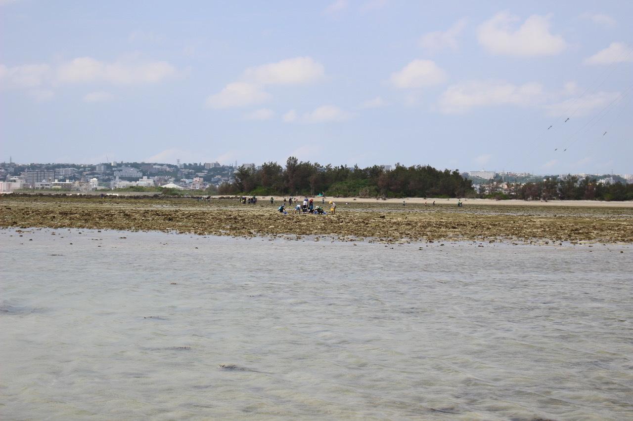 ネコクラブABC合同-06◆秋の干潟で収穫まつり(10/17)沖縄随一の干潟、泡瀬干潟で丸一日潮干狩りにチャレンジ。貝もカニもいっぱいで、お腹いっぱいになりました!_d0363878_00123217.jpeg
