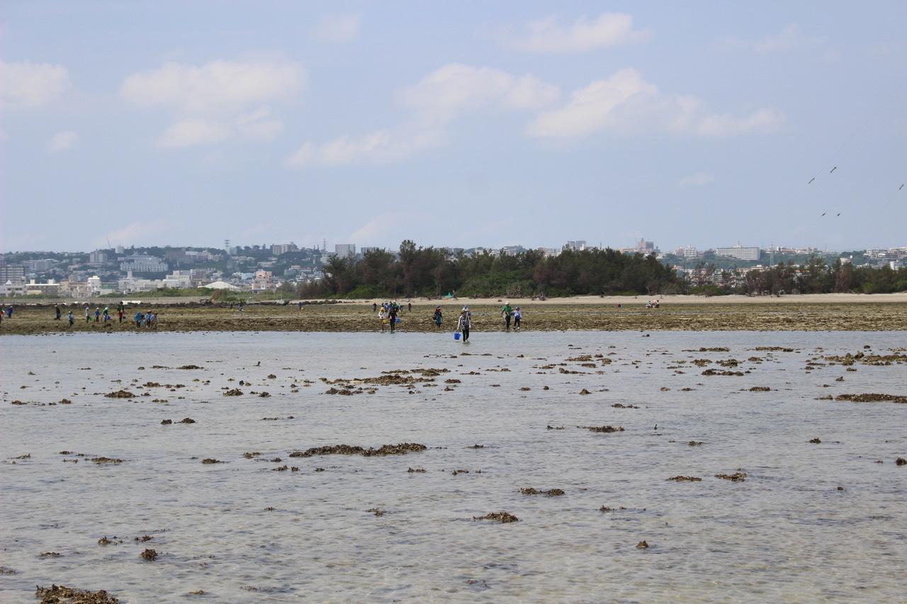 ネコクラブABC合同-06◆秋の干潟で収穫まつり(10/17)沖縄随一の干潟、泡瀬干潟で丸一日潮干狩りにチャレンジ。貝もカニもいっぱいで、お腹いっぱいになりました!_d0363878_00123232.jpeg