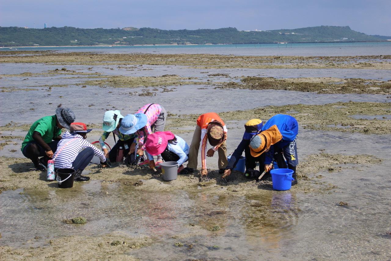 ネコクラブABC合同-06◆秋の干潟で収穫まつり(10/17)沖縄随一の干潟、泡瀬干潟で丸一日潮干狩りにチャレンジ。貝もカニもいっぱいで、お腹いっぱいになりました!_d0363878_00125157.jpeg