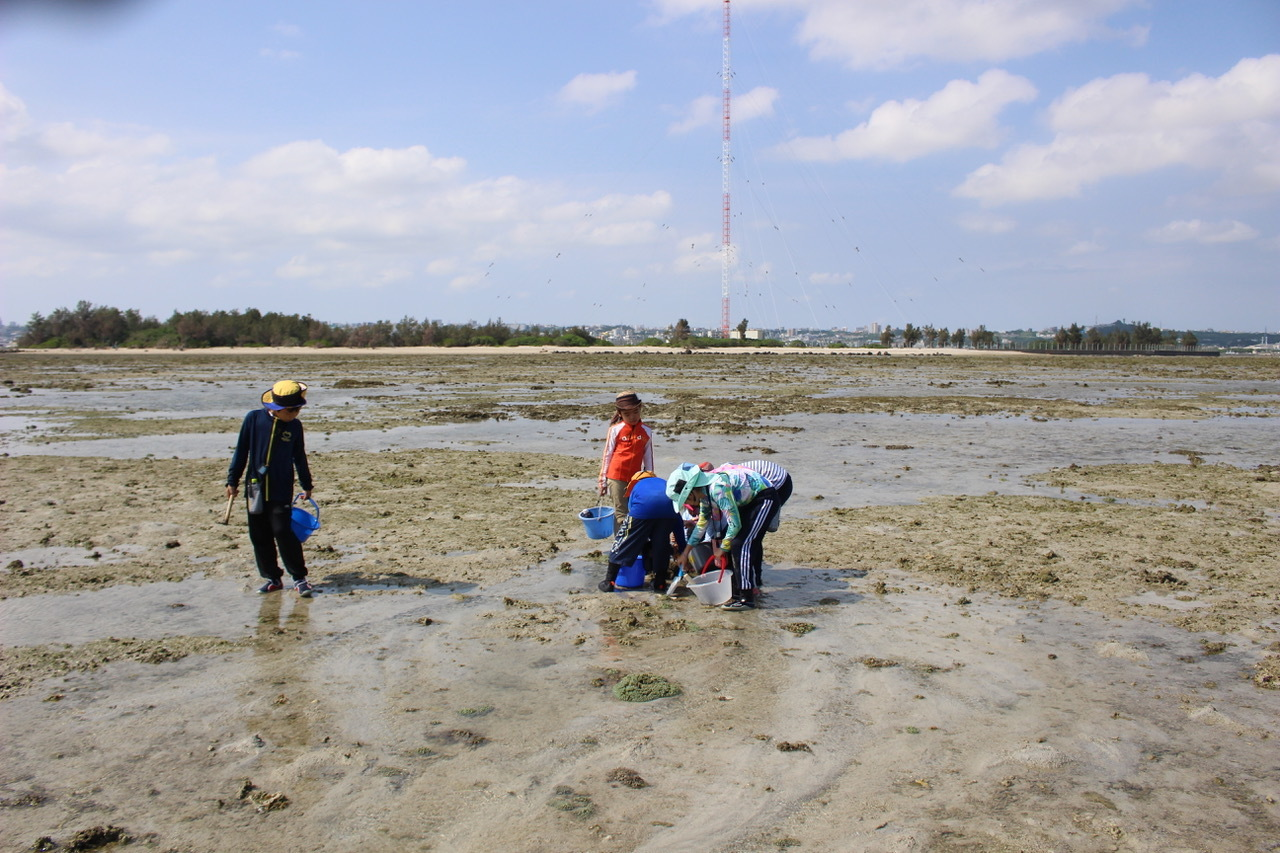ネコクラブABC合同-06◆秋の干潟で収穫まつり(10/17)沖縄随一の干潟、泡瀬干潟で丸一日潮干狩りにチャレンジ。貝もカニもいっぱいで、お腹いっぱいになりました!_d0363878_00125178.jpeg
