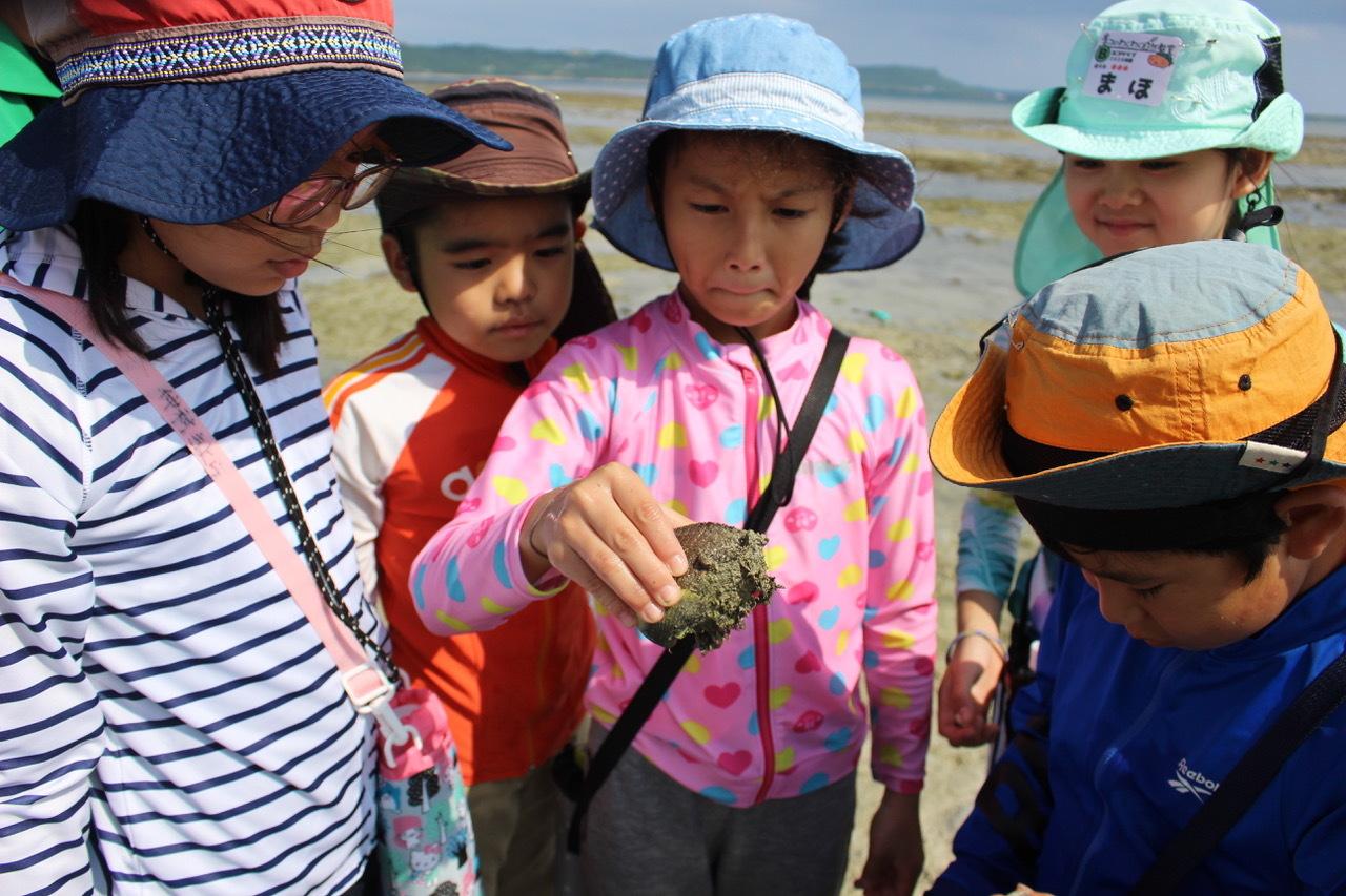 ネコクラブABC合同-06◆秋の干潟で収穫まつり(10/17)沖縄随一の干潟、泡瀬干潟で丸一日潮干狩りにチャレンジ。貝もカニもいっぱいで、お腹いっぱいになりました!_d0363878_00125255.jpeg