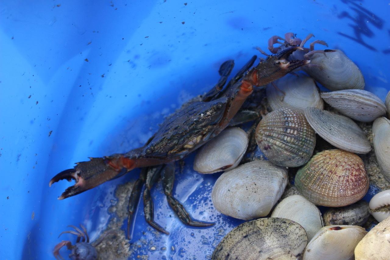ネコクラブABC合同-06◆秋の干潟で収穫まつり(10/17)沖縄随一の干潟、泡瀬干潟で丸一日潮干狩りにチャレンジ。貝もカニもいっぱいで、お腹いっぱいになりました!_d0363878_00130689.jpeg