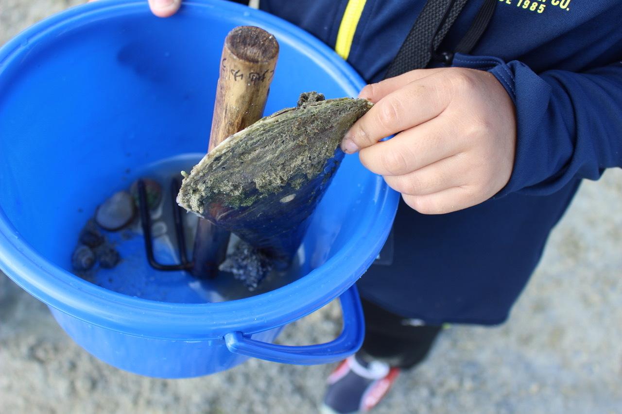 ネコクラブABC合同-06◆秋の干潟で収穫まつり(10/17)沖縄随一の干潟、泡瀬干潟で丸一日潮干狩りにチャレンジ。貝もカニもいっぱいで、お腹いっぱいになりました!_d0363878_00132029.jpeg
