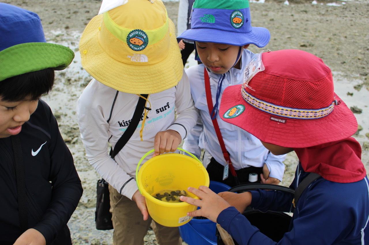 ネコクラブABC合同-06◆秋の干潟で収穫まつり(10/17)沖縄随一の干潟、泡瀬干潟で丸一日潮干狩りにチャレンジ。貝もカニもいっぱいで、お腹いっぱいになりました!_d0363878_00135249.jpeg