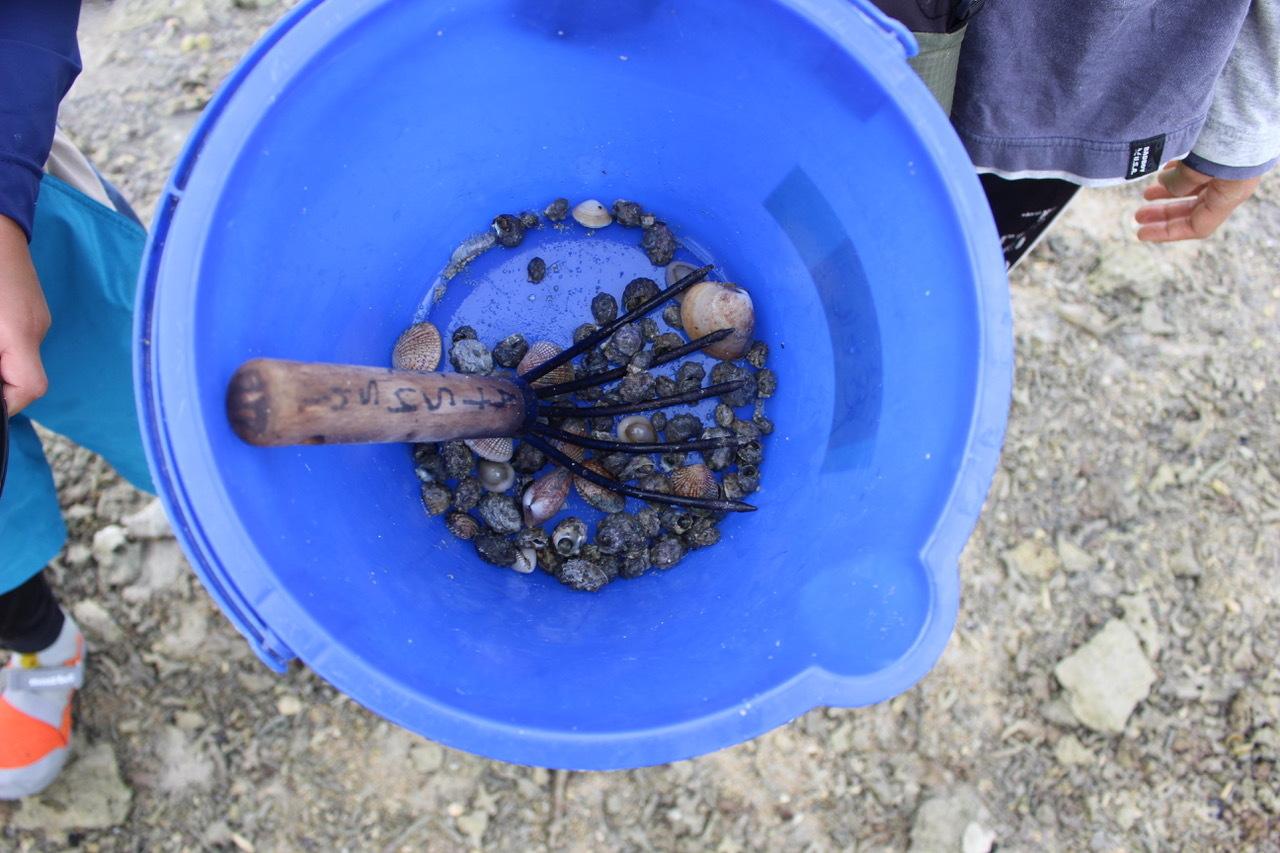 ネコクラブABC合同-06◆秋の干潟で収穫まつり(10/17)沖縄随一の干潟、泡瀬干潟で丸一日潮干狩りにチャレンジ。貝もカニもいっぱいで、お腹いっぱいになりました!_d0363878_00135257.jpeg