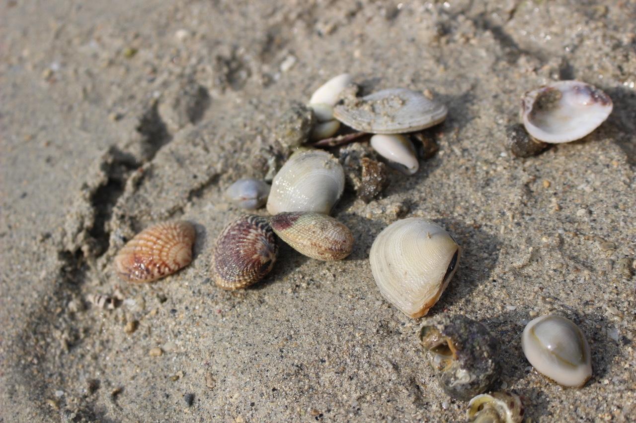 ネコクラブABC合同-06◆秋の干潟で収穫まつり(10/17)沖縄随一の干潟、泡瀬干潟で丸一日潮干狩りにチャレンジ。貝もカニもいっぱいで、お腹いっぱいになりました!_d0363878_00140571.jpeg