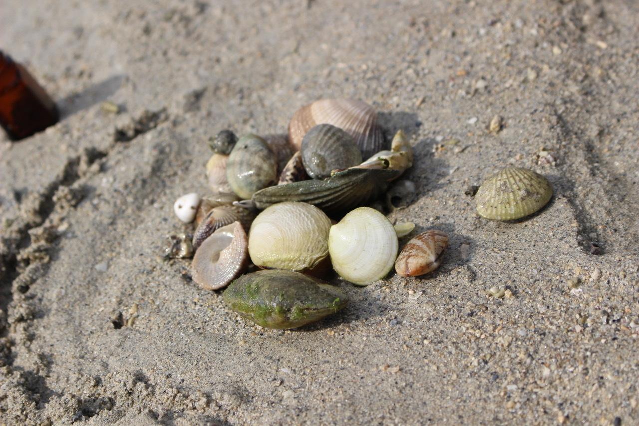 ネコクラブABC合同-06◆秋の干潟で収穫まつり(10/17)沖縄随一の干潟、泡瀬干潟で丸一日潮干狩りにチャレンジ。貝もカニもいっぱいで、お腹いっぱいになりました!_d0363878_00142728.jpeg