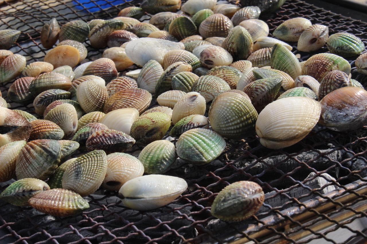ネコクラブABC合同-06◆秋の干潟で収穫まつり(10/17)沖縄随一の干潟、泡瀬干潟で丸一日潮干狩りにチャレンジ。貝もカニもいっぱいで、お腹いっぱいになりました!_d0363878_00144548.jpeg