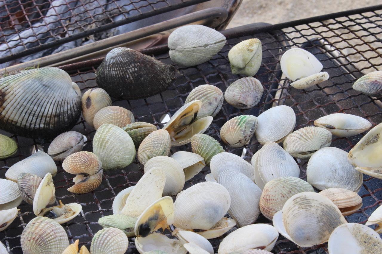 ネコクラブABC合同-06◆秋の干潟で収穫まつり(10/17)沖縄随一の干潟、泡瀬干潟で丸一日潮干狩りにチャレンジ。貝もカニもいっぱいで、お腹いっぱいになりました!_d0363878_00144554.jpeg