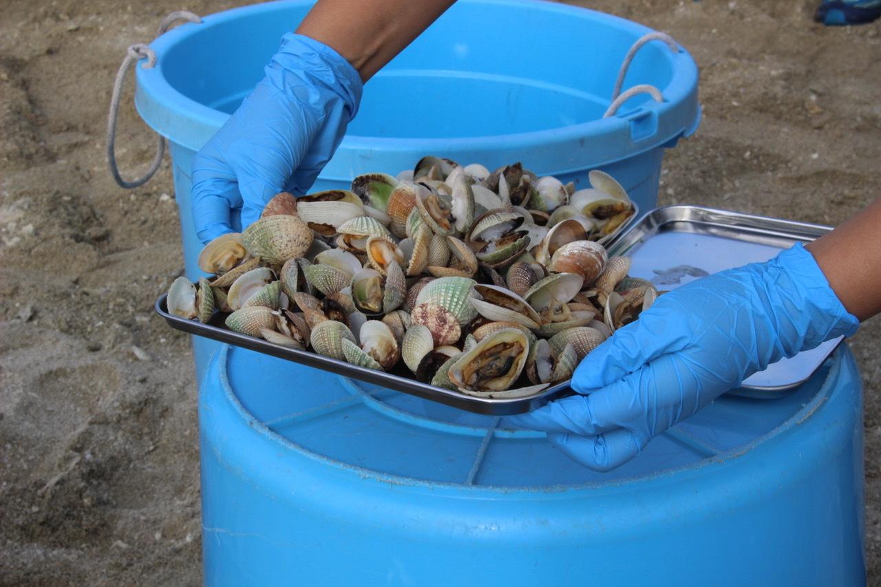 ネコクラブABC合同-06◆秋の干潟で収穫まつり(10/17)沖縄随一の干潟、泡瀬干潟で丸一日潮干狩りにチャレンジ。貝もカニもいっぱいで、お腹いっぱいになりました!_d0363878_00145849.jpeg