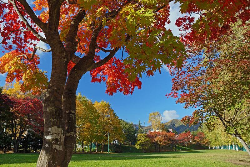 公園巡りの紅葉シリーズ_d0162994_13510050.jpg