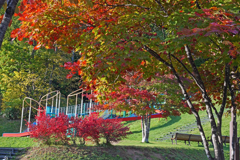 公園巡りの紅葉シリーズ_d0162994_13513250.jpg