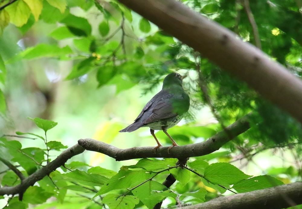探鳥、歩けば。鳥にあたる、_f0305401_16281137.jpg