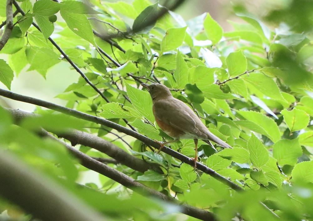 探鳥、歩けば。鳥にあたる、_f0305401_16281973.jpg