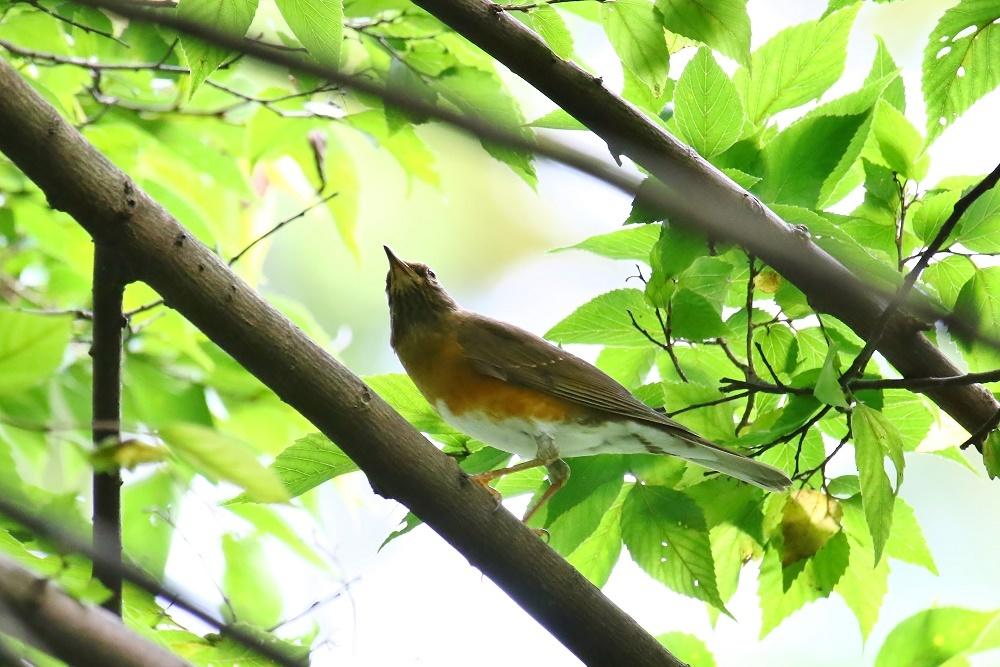 探鳥、歩けば。鳥にあたる、_f0305401_16283122.jpg