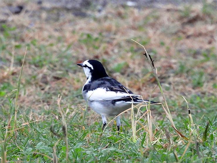 鳥日和_f0214649_19521527.jpg