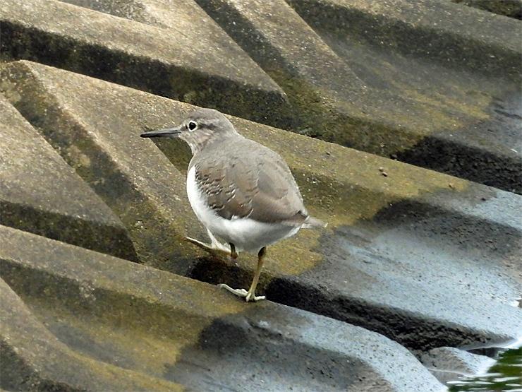 鳥日和_f0214649_19530770.jpg