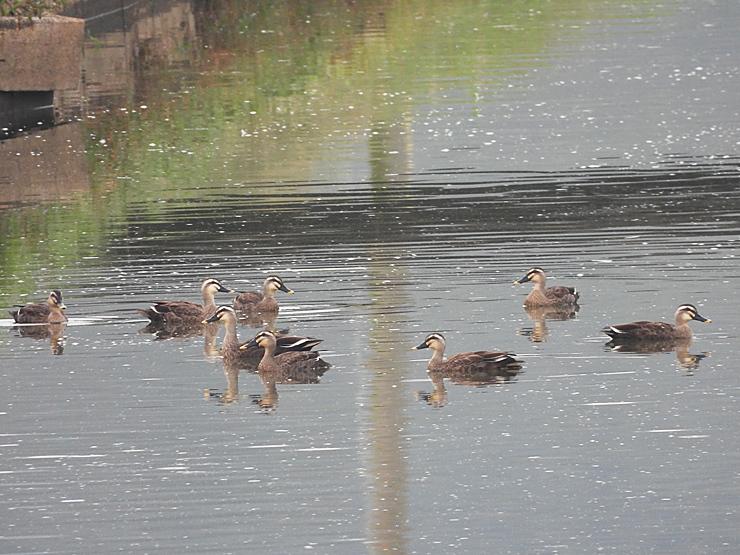 鳥日和_f0214649_19540537.jpg