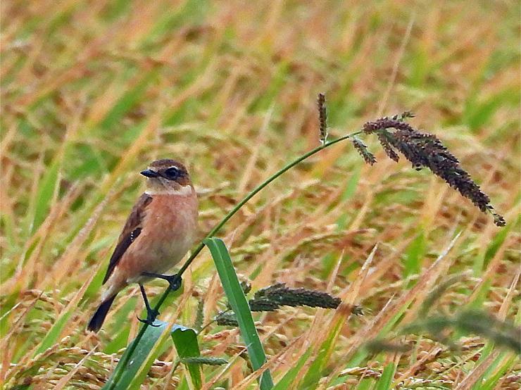 鳥日和_f0214649_19542421.jpg