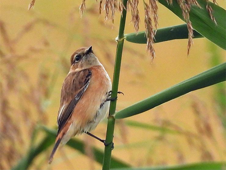 鳥日和_f0214649_19543051.jpg