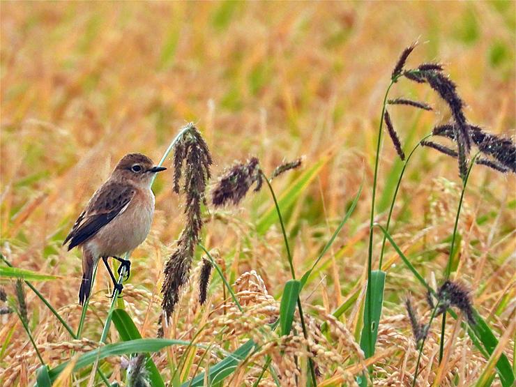 鳥日和_f0214649_19543726.jpg