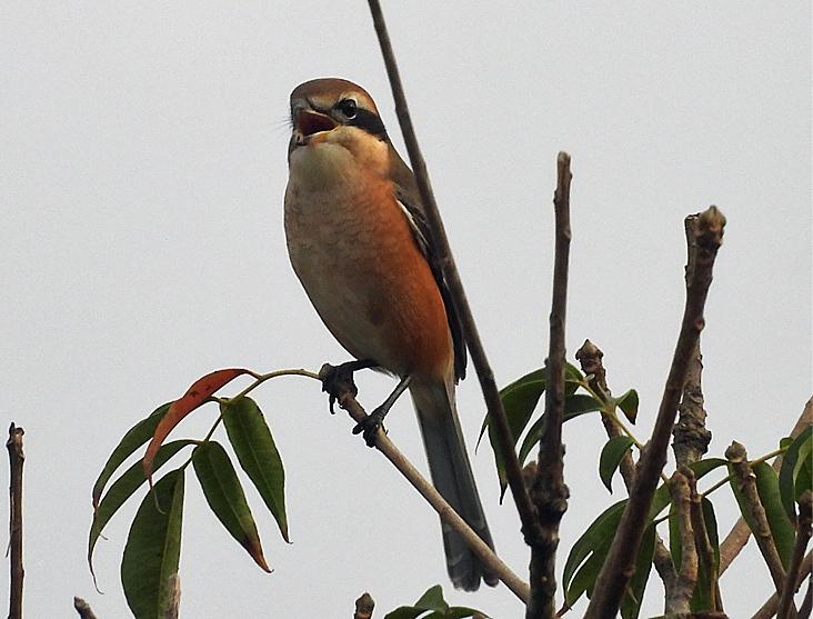 鳥日和_f0214649_19544224.jpg