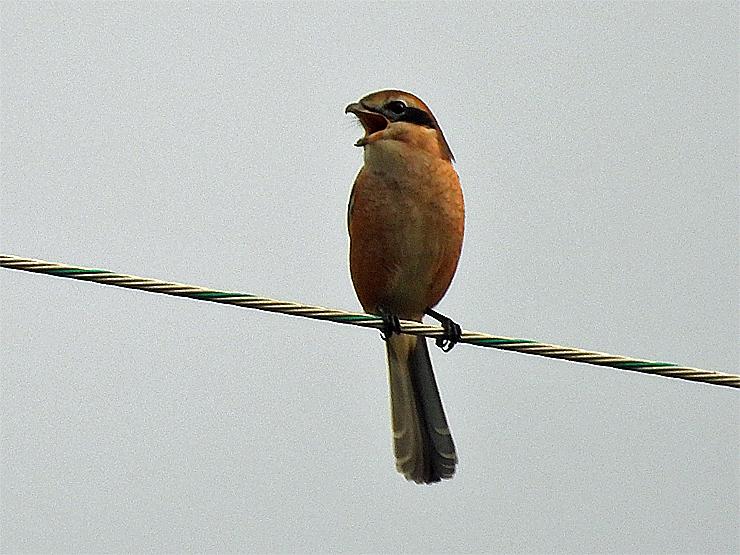 鳥日和_f0214649_19544733.jpg