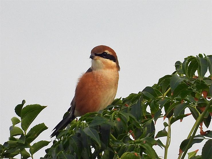 鳥日和_f0214649_19550197.jpg