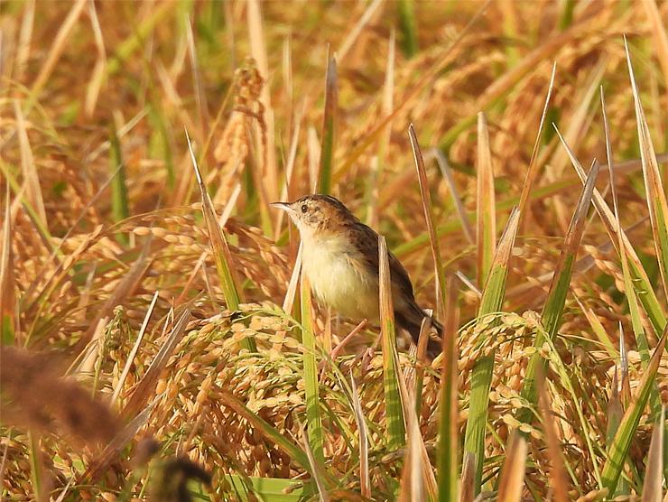 鳥日和_f0214649_19551771.jpg