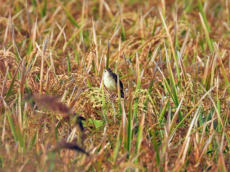 鳥日和_f0214649_19560298.jpg