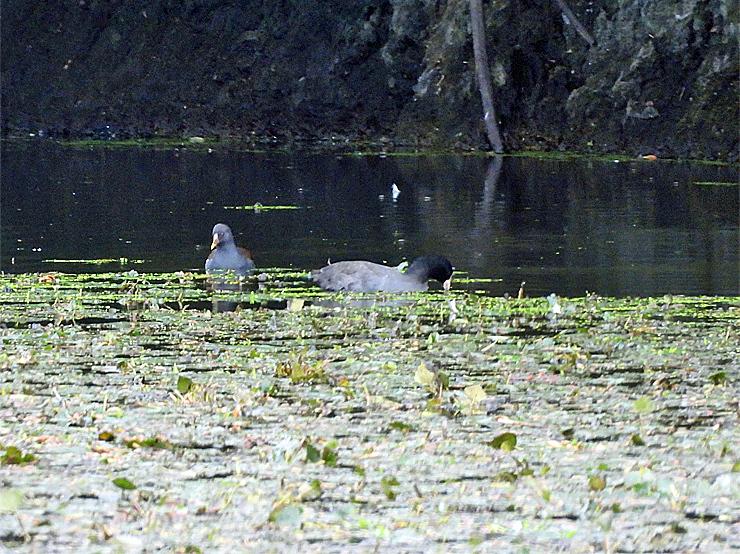 鳥日和_f0214649_19584471.jpg