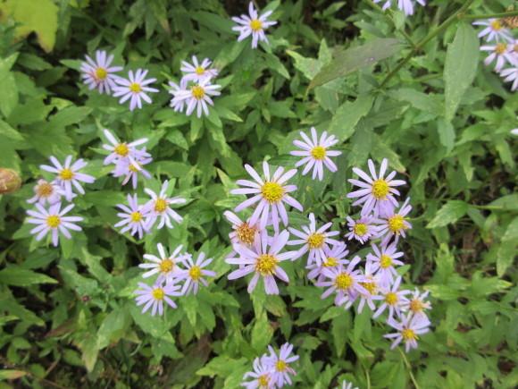 六甲高山植物園_d0154954_18303355.jpg