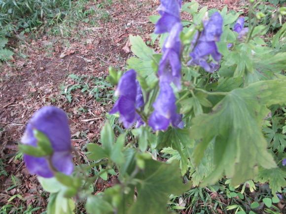 六甲高山植物園_d0154954_18323366.jpg