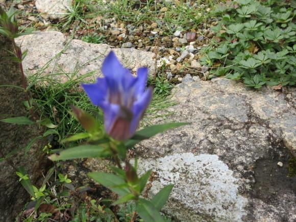 六甲高山植物園_d0154954_18345788.jpg