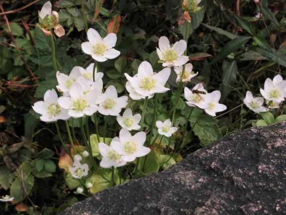六甲高山植物園_d0154954_18363094.jpg