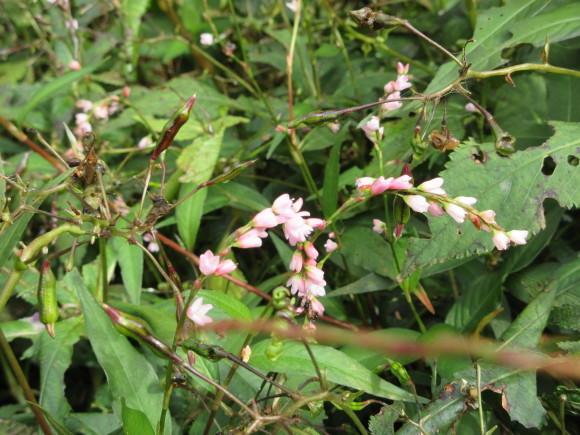 六甲高山植物園_d0154954_18370950.jpg