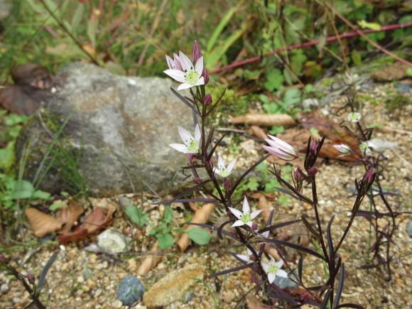 六甲高山植物園_d0154954_18374235.jpg