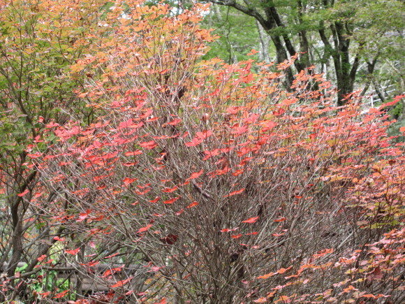 六甲高山植物園_d0154954_18390623.jpg