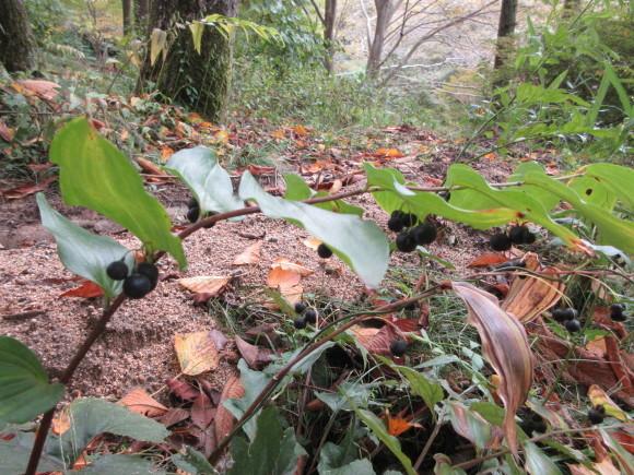 六甲高山植物園_d0154954_18400271.jpg