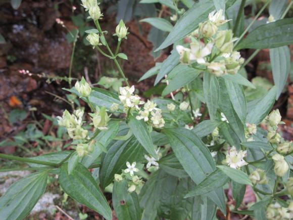 六甲高山植物園_d0154954_18403031.jpg